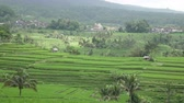 hántolatlan rizs : view on rice terraces of mountain and house of farmers. Bali, Indonesia