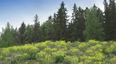 бахрома : Yellow flowers grow on the fringe of the forest in sunny day