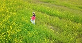 jediný květ : View from the drone on the young woman going across the field with yellow colors to summer sunny day