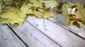 wood flooring : Wind blows off the fallen autumn leaves of a maple from a wooden flooring.Slow motion