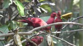 ара : red parrot on the tree in the jungle