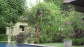 tropical garden with flowering trees. Bali. Indonesia. Wideo