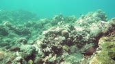 scuba dive : underwater landscape of the tropical sea, fish and corals of different color