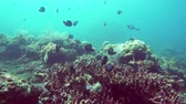 underwater landscape of the tropical sea, fish and corals of different color