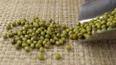 hearty : Seeds of green Asian bean (mung bean) falls out of a metal scoop