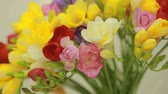frezja : small bouquet of multicolored freesias in vase Wideo