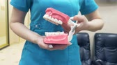toothpaste : The dentist shows the structure of the mouth with the help of a model of the human jaw. 4k, slow motion