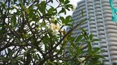 balcony view : tropical plants on the background of a skyscraper. urban tropical landscape