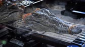 krokodyl : The concept of Asian cuisine. heads of little alligators, on the brazier Wideo