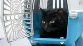 weterynaria : veterinary concept. black cat in a carrier for animals in a veterinary clinic Wideo