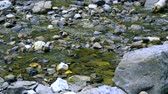 brooks : fallen autumn leaves in a mountain stream floating on the water among the stones. Stock Footage