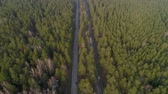 Aerial Flight over the road between forests. Trees in the middle two roads Stok Video