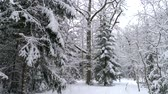 Aerial - Flight inside snowy forest. Drone flies through trees Stok Video