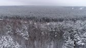 Amazing drone footage. Winter landscape in the forest
