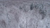 Drone reveals Winter landscape in the forest.