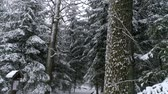 Aerial - Flight inside snowy forest. Drone flies through big trunks