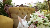 pet : White Little Rabbit on chair, armchair wedding bouquet
