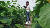 berinjela : Girl agronomist taking notes.Young agronomists monitor the harvest. Young farmers are grown and harvested organic vegetables.