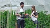beringela : Guy gathering vegetables approached the girl agronomist. Young agronomists monitor the harvest. Young farmers are grown and harvested organic vegetables.