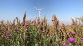 energia alternativa : Thistle plants with purple flowers on wind and windmill turbine tower as background. Sustainable alternative electricity energy source in harmony with nature. Renewable technology in nature