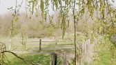 pastvisko : Birch branch with aglets and grazing horses in paddock as background at spring day. Birch-tree with earrings and farm animals. Season of flowering on ranch. New beginning concept. Blossoming pollen