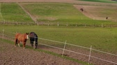 pastvisko : Two grazing brown horses near fence in farm paddock at spring day. Horse eating green grass in country landscape. Horse grazed on meadow. Domestic animals on pastures. Horses feeding on ranch. Nature