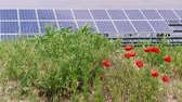 photovoltaic : Cell solar panels green energy near poppy flowers and grass at windy day. Eco power from photovoltaic modules generating electricity and plants. Alternative electricity source on flowering meadow