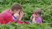 Happy children covering eyes with ripe red garden strawberries in green leaves, handheld shot. Boy and little girl having fun with berries instead of eyeballs. Kids holding fruits at eyes at summer Stok Video