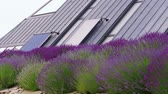 photovoltaic : Cell solar panels green energy on house roof and lavender flowers at windy day. Eco power from photovoltaic power station modules generating electricity and plants. Home alternative electricity source Stock Footage