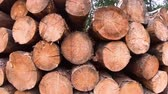ohniště : Deforestation in forest, stove woods in wood stack closeup. Woodwork and timber industry. Wood-pulp industry, woodworking. Devastation of forests, uncontrolled clearance concept. Trees in log woodpile
