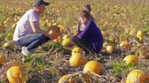 Family on pumpkins field, man showing to children vegetable, picking it. Autumn harvest on farm, father, son, daughter choosing pumpkin crop. Agriculture with kids. Thanksgiving, Halloween preparation Stok Video