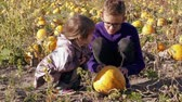 Two children having fun on pumpkins field, knocking, touching vegetable. Boy, little girl picking pumpkin. Autumn harvest on farm, son, daughter choosing crop. Agriculture with kids. Garden gathering Stok Video