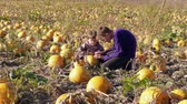 Boy and small girl having fun touching pumpkin on farm. Two children knocking to pumpkin at harvesting. Autumn harvest on farm, kids choosing vegetable crop. Thanksgiving and Halloween preparation Stok Video