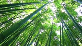 шуй : Bamboo forest. The trunks of bamboo stretch up high