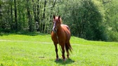 Beautiful horse is standing on a green summer meadow Stock Footage