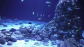 Beautiful scene of underwater life Stock Footage