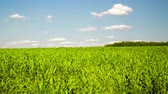 sky : Green field with white clouds using motorized slider