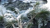 icings : branch of cedar covered with hoarfrost lies on a freezing stream Stock Footage