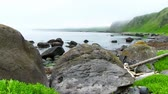 Okhotsk Sea, Iturup Island, Russia. Sea waves break up on coastal rocks covered with algae. Slowmotion 240 FPS