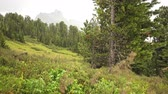 Mount and forest in the rainy day Stock Footage