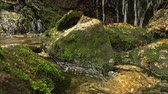 a small mountain stream flows through the rocks Stock Footage