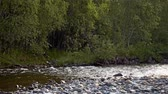 proud : Clear mountain river in the forest. Original sound. UHD