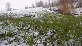 büyük : Heavy snowfall over forest and field landscape in early spring Stok Video