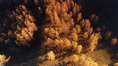 scène rurale : Flight over autumn forest. Overhead aerial view of top of autumn forest Vidéos Libres De Droits