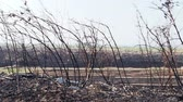 wypadek : Panorama of the forest after the fire. Slow motion.