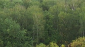 russian : above view of wet trees in forest in september rain