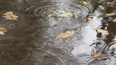 float : raindrops and floating yellow leaves of oak tree in puddle on asphalt road in autumn rain Stock Footage