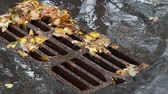 asfalt : fallen leaves and puddle near urban drain grid on street in autumn rain
