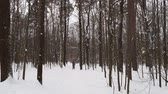amateur : winter day Stock Footage
