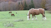 umbrie : Beautiful wild horses in the forest in the mount Cucco in Umbria, Italy.